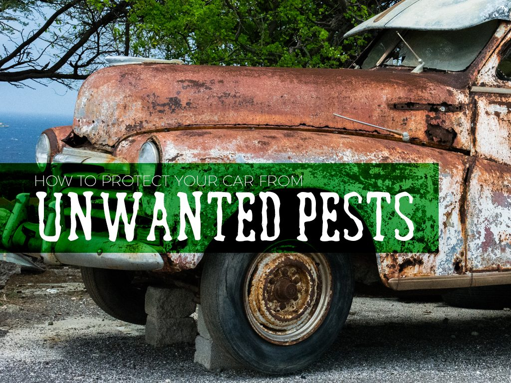 How to Protect Your Car from Unwanted Pests