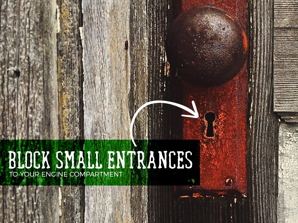 Block small entrances to your engine compartment