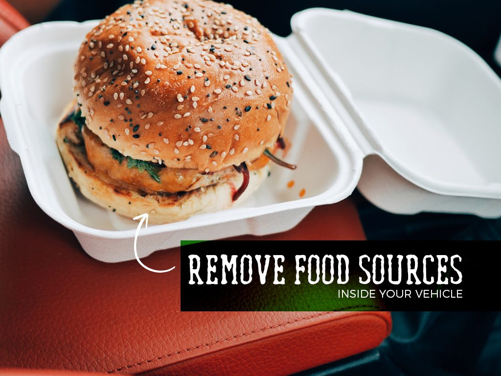 Remove any food sources inside your vehicle