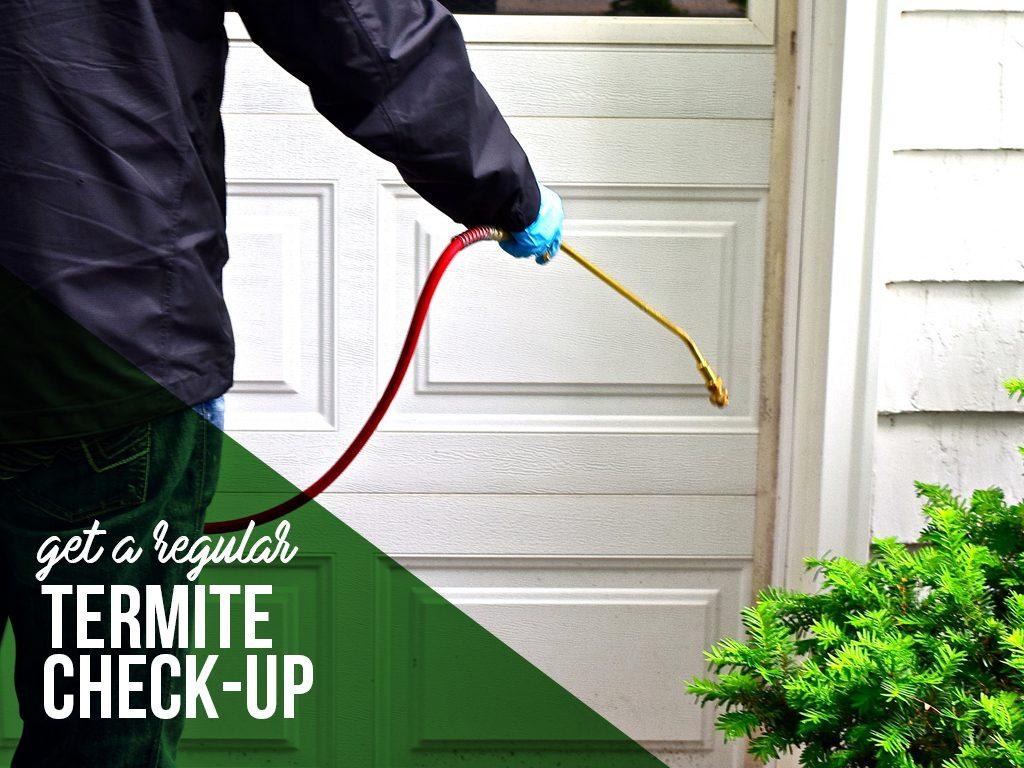 Get a regular termite check up