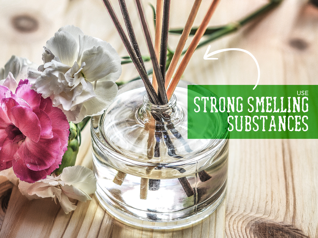 Use strong smelling substances