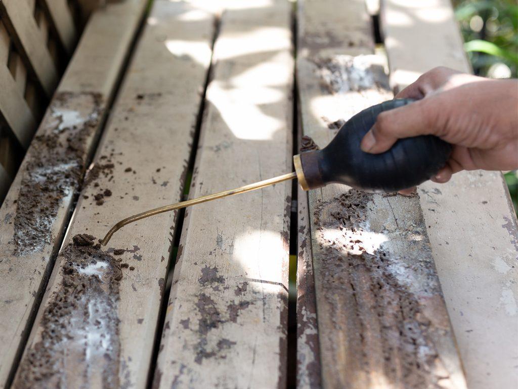 Tips for Successful Termite Control
