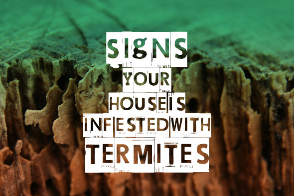 Termite Control - 5 Signs Your House Is Infested With Termites