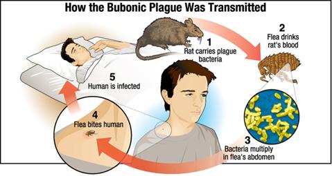 Bubonic Plage