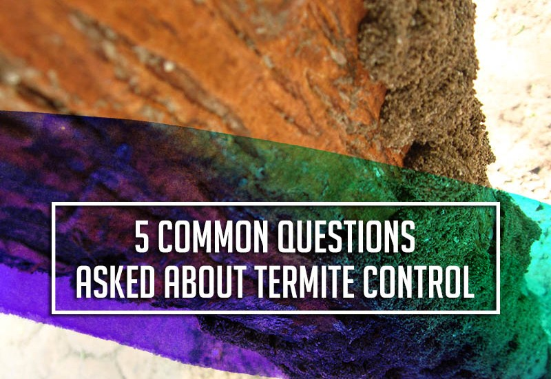 TopBest - 5 Questions Asked About Termite Control