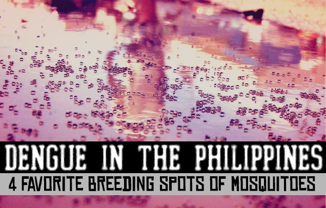 Dengue In The Philippines - 4 Favorite Breeding Spots of Mosquitoes