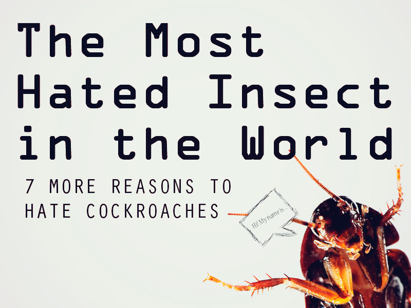 the-most-hated-insect-in-the-world