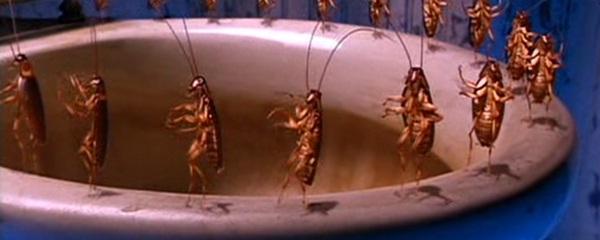 Joe's cockroaches