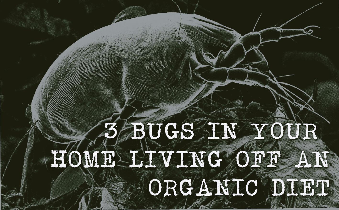 3-Bugs-Living-Off-Organic-Diet
