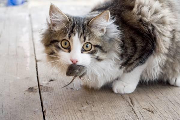 cat-mouse.jpgCat