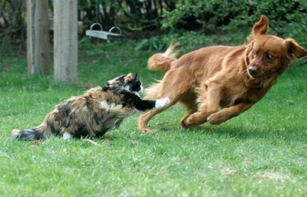 cat_chase_dog.jpgdog chase cat