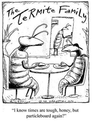 termite family