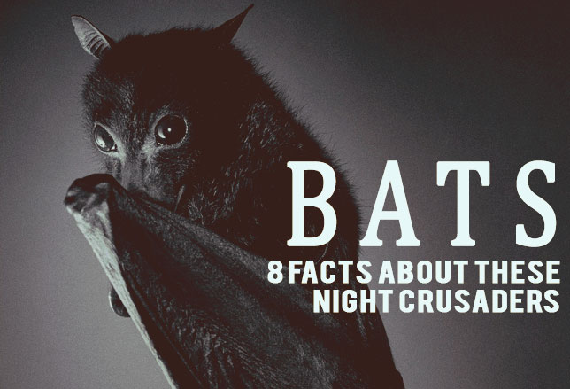 Bats-facts