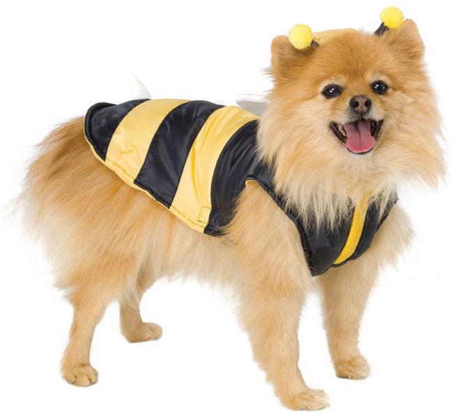 pet in bee
