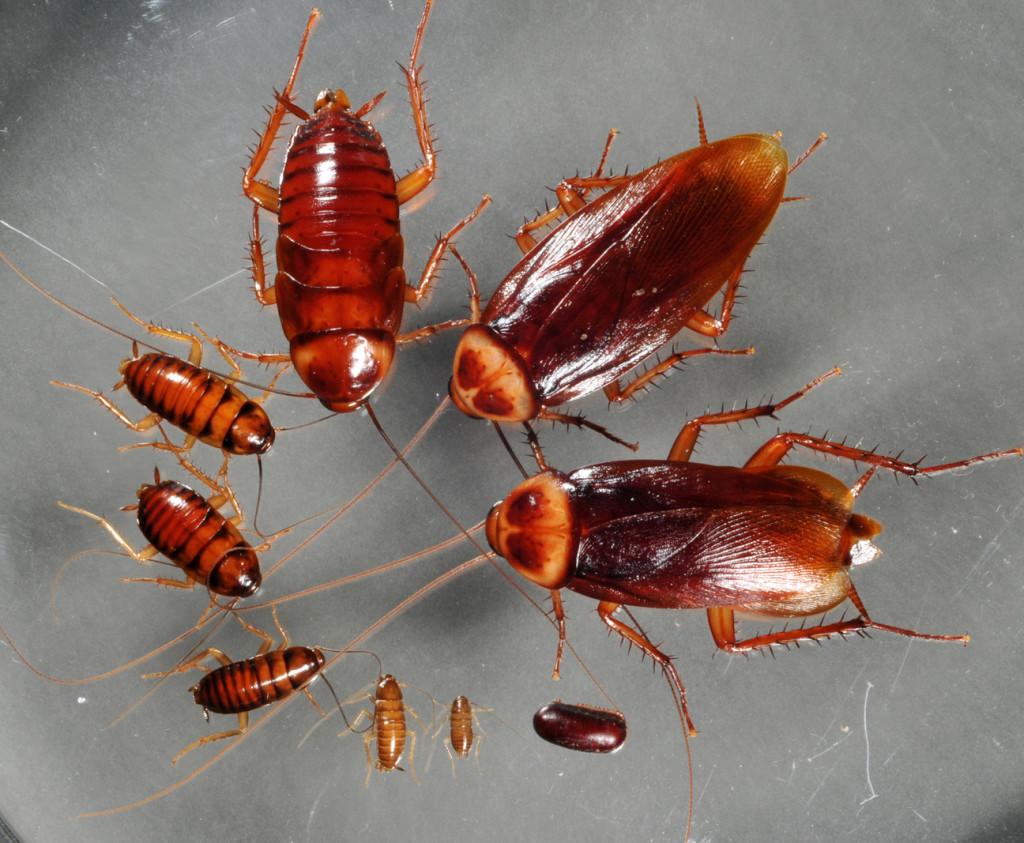 cockroaches 1
