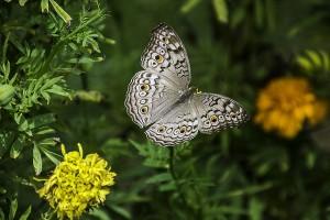 all-about-butterflies