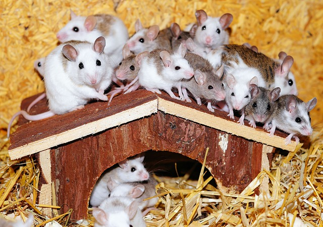 rats around a house