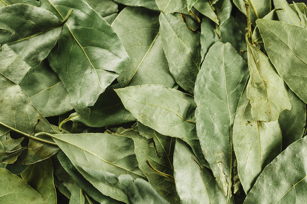 Bay Leaves as Insect Repellent