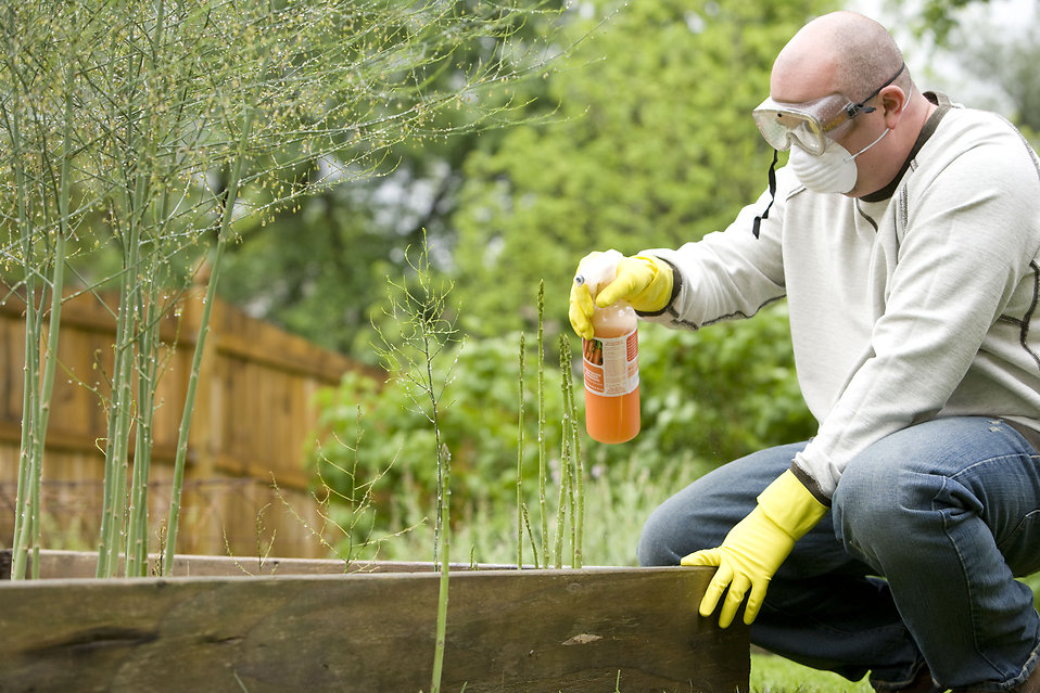 4 Reasons Pest Control Should Be Left to the Experts