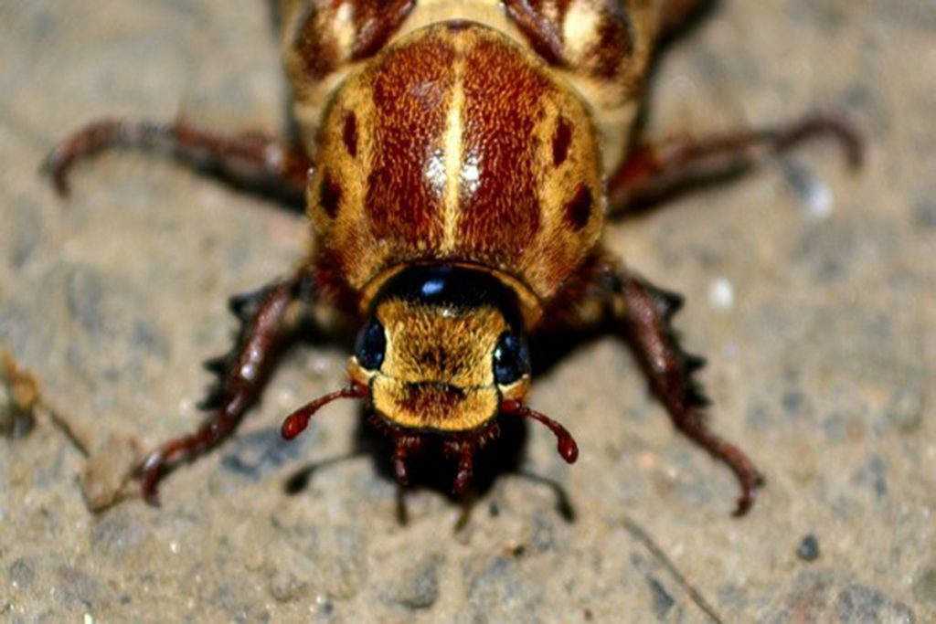 4-of-the-Scariest-Insect-Invaders