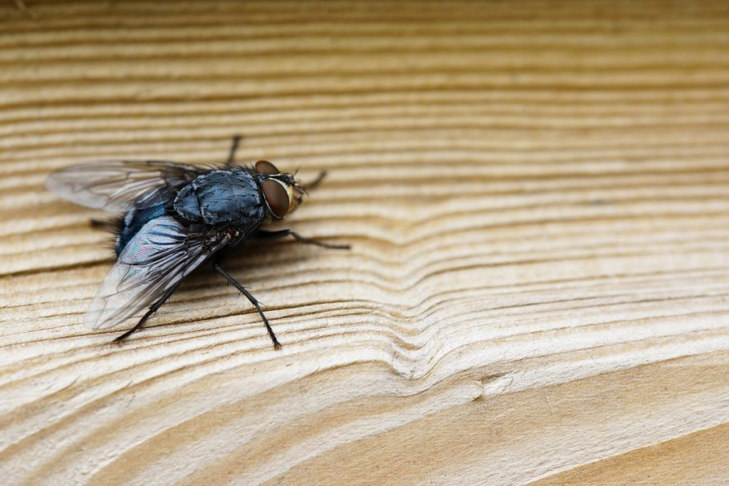 6 Things That Attract Flies to Your Home