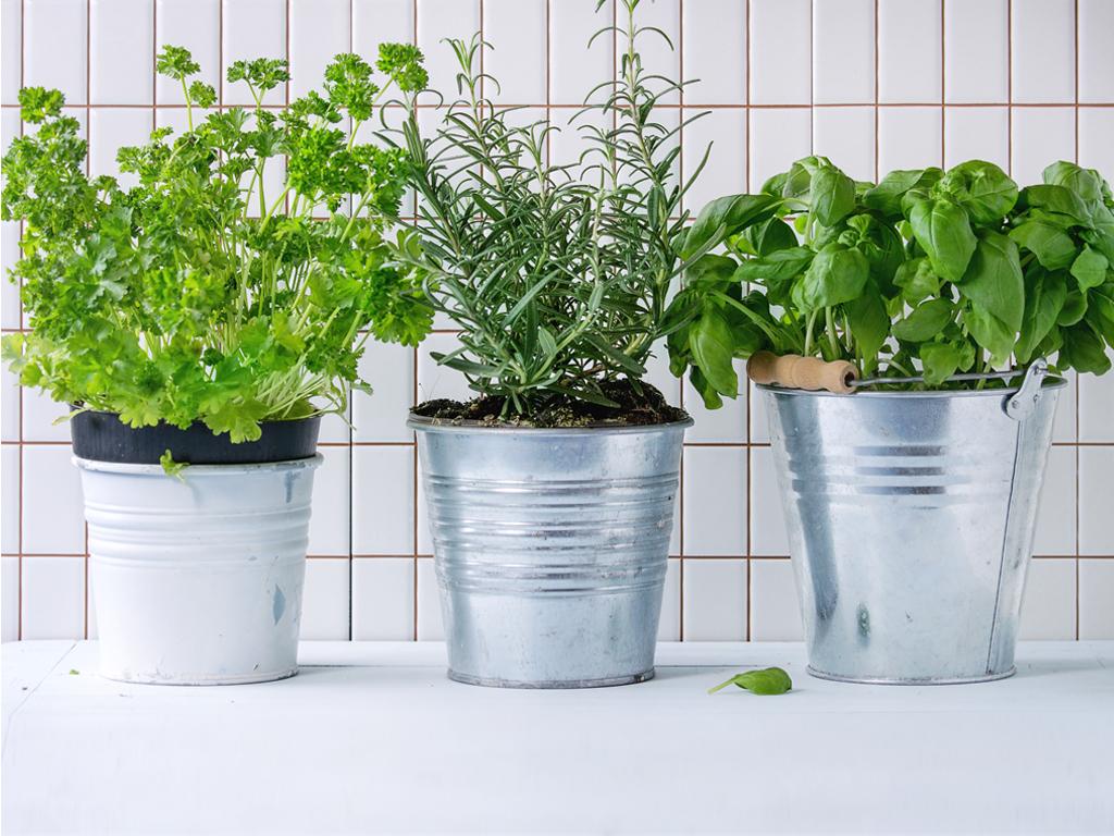 Trim Plants Around Your House