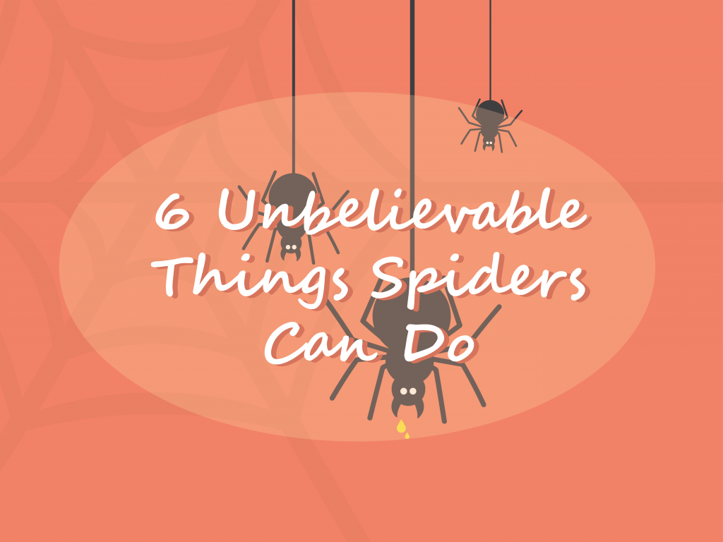 6 Unbelievable Things Spiders Can Do