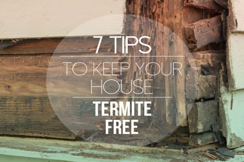9-Tips-To-Keep-Your-House-Termite-Free