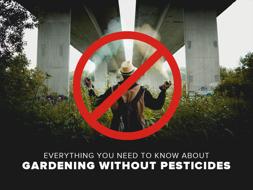 Everything You Need to Know About Gardening Without Pesticides