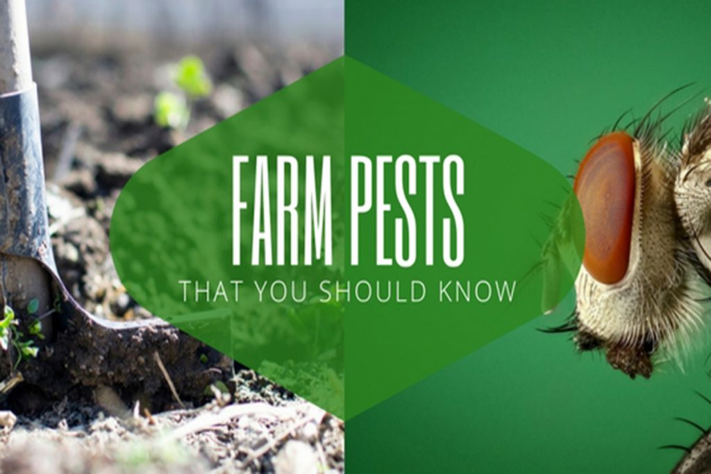 Farm-Pests-That-You-Should-Know-2