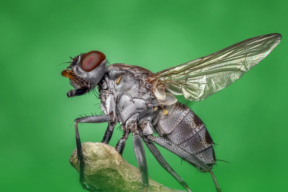 Health Risks Being Brought by House Flies