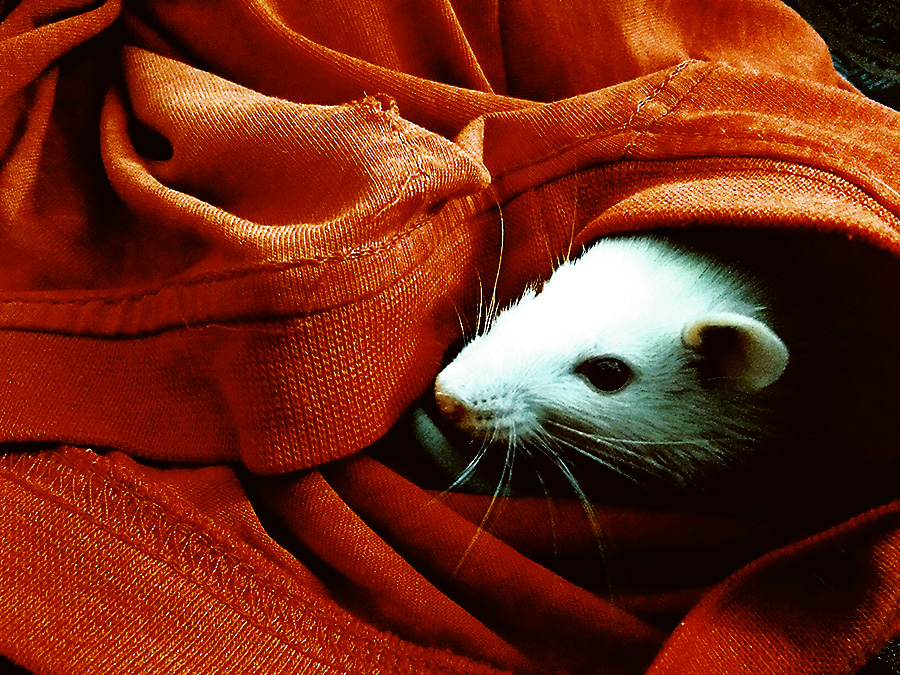 Hiding-Places-for-Pests-TOPBEST