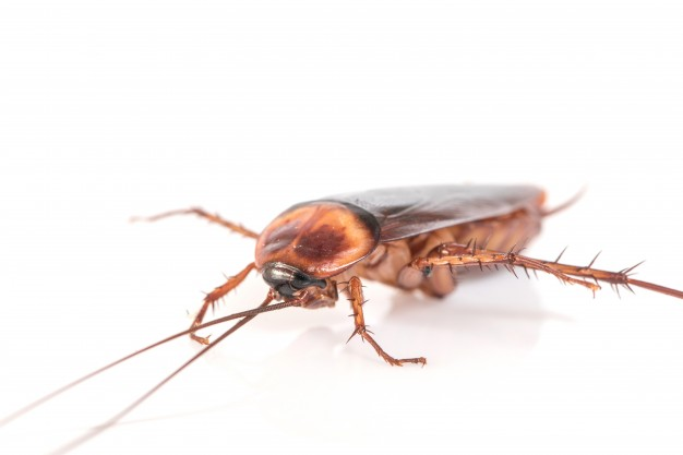 How to Deal With Cockroaches in Your Home Before Calling Pest Control Services