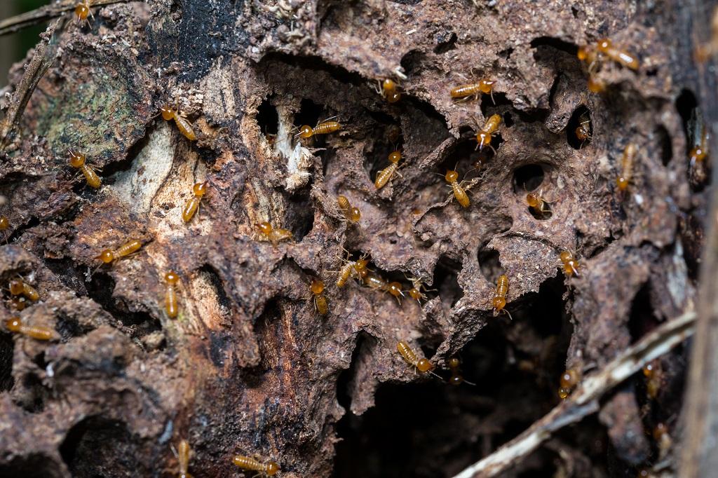 Keep Moisture Away from Wood