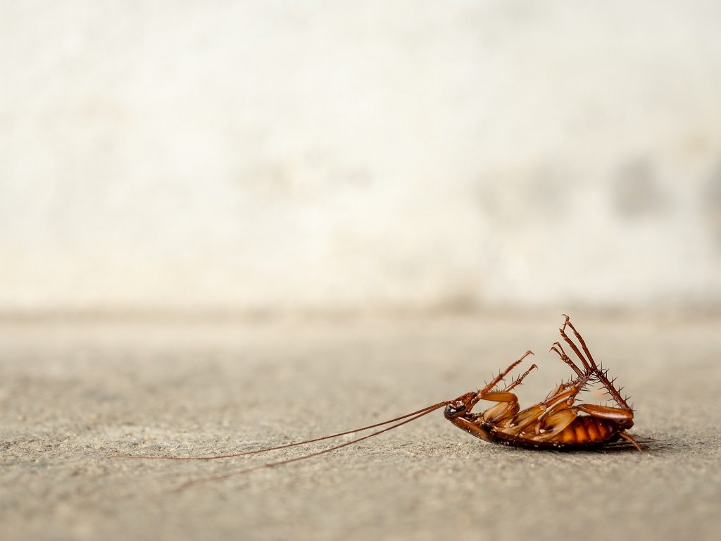 Pest Control Best Way to Get Rid of Roaches