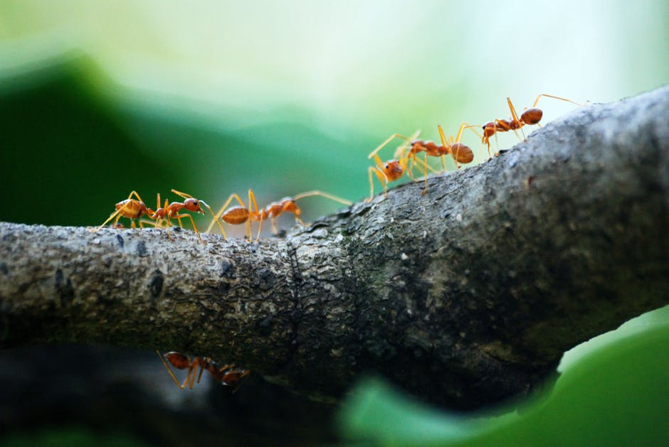Pest Control: The Difference Between Ants and Termites