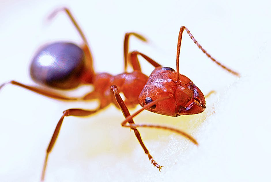 Physical Appearance of Carpenter Ants