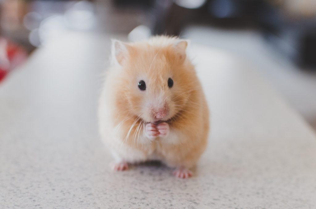 Rodent Prevention and Control All You Need to Know