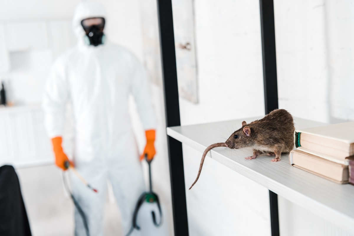 Similarities and Differences of Rats Vs Mice Pest Control