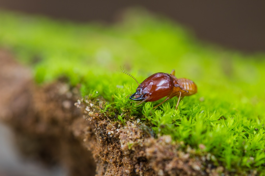 The Environment can Benefit from Termites