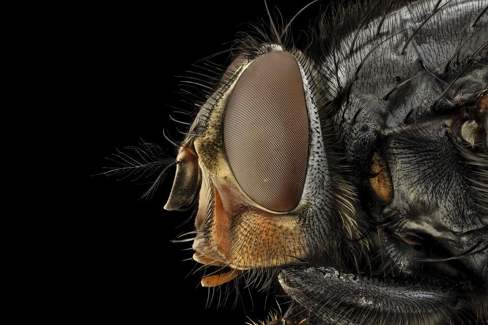 The Health Hazards of House Flies