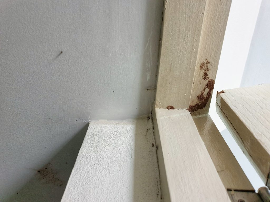 What to Expect from Termite Treatments