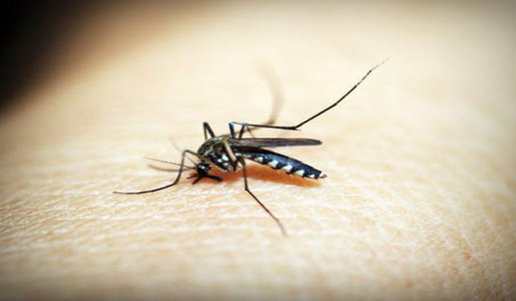 Who-Bit-Me-Identifying-Bug-Bites