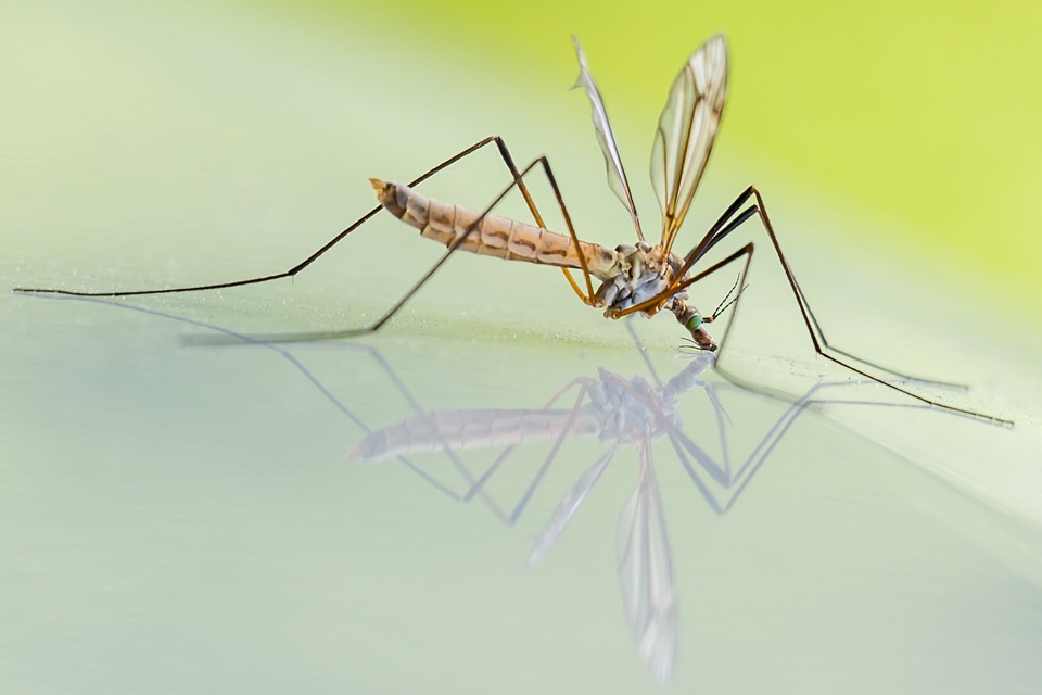 mosquito on a glass