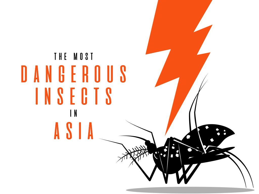 The Most Dangerous Insects in Asia