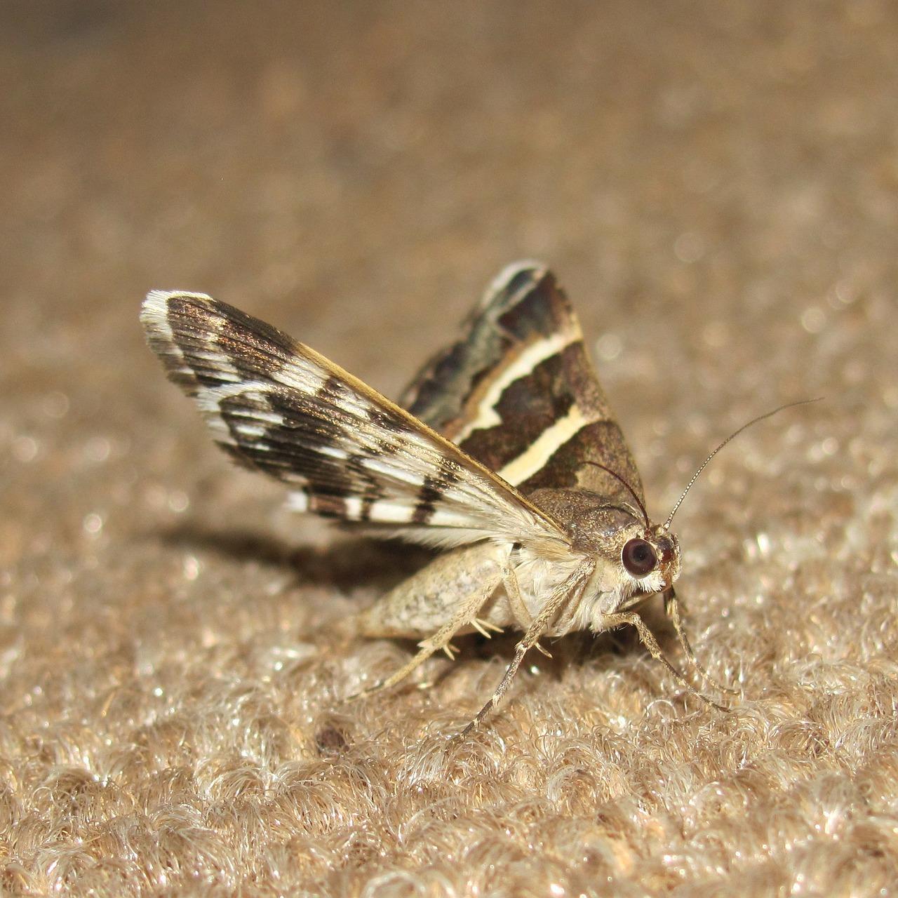 Moths 265667 1280