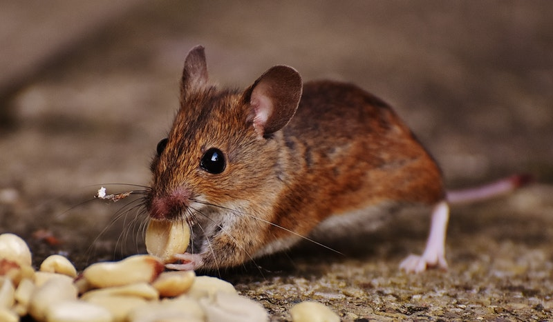 Pest Repellents You Should Try Out