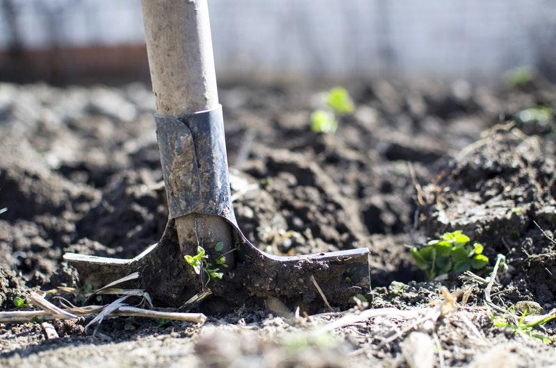 Pesticides vs Organic Pest Control: How to Choose
