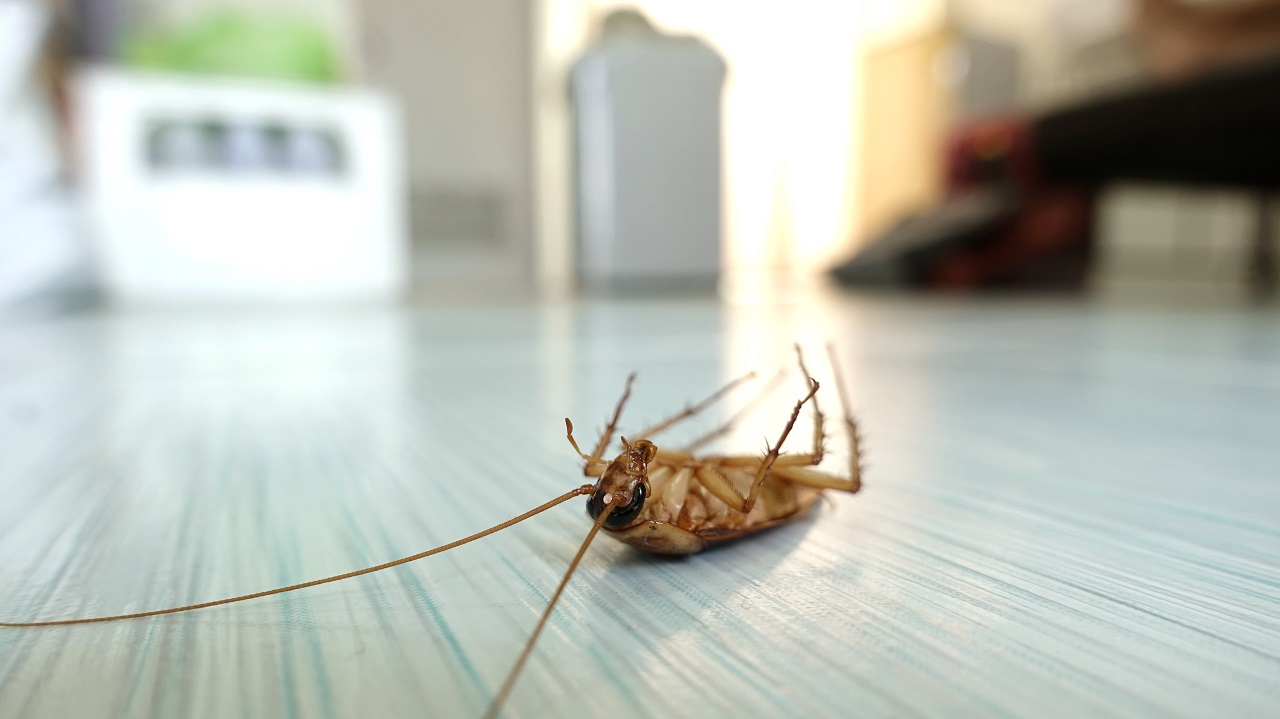 photo of a cockroach on the floor at home