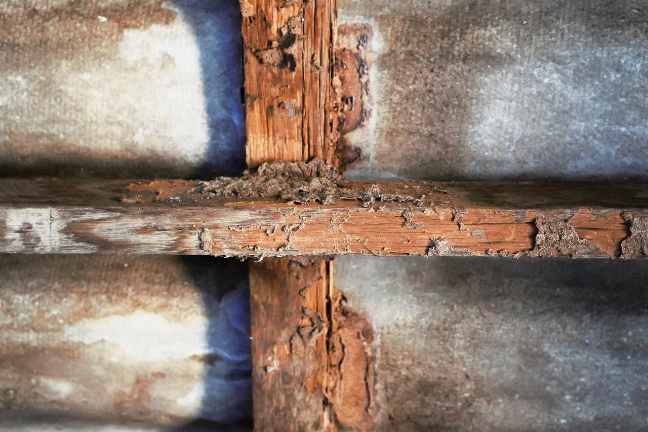photo of termites and termite damage